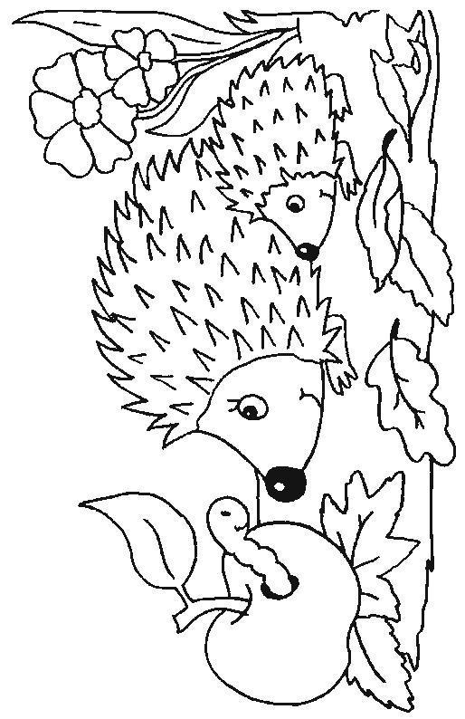 Planse De Colorat Animale Arici De Colorat P33 Desene De