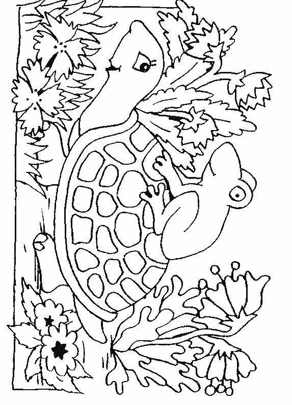 Planse De Colorat Cu Animale Broaste Testoase Desene De