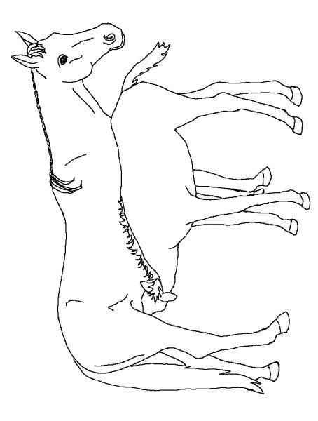 Planse De Colorat Cu Animale Cai Desene De Colorat Cu