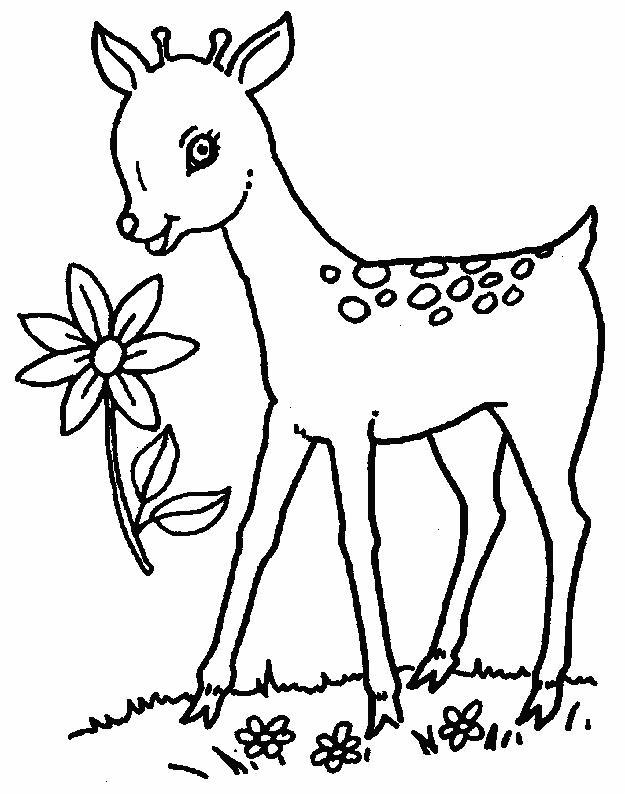 Planse De Colorat Cu Animale Caprioare Desene De Colorat