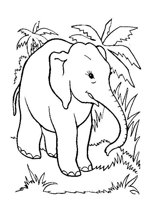 Planse De Colorat Animale Elefanti De Colorat P08 Desene