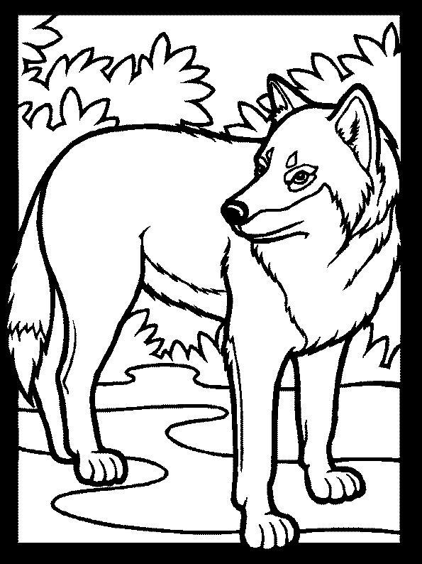 Planse De Colorat Animale Lupi De Colorat P20 Desene De
