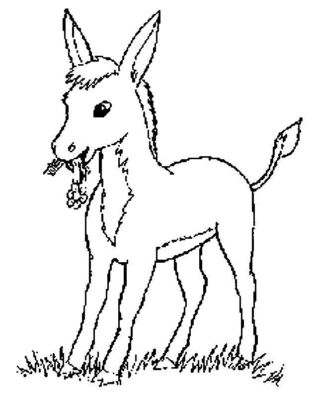 Planse De Colorat Cu Animale Magari Desene De Colorat Cu