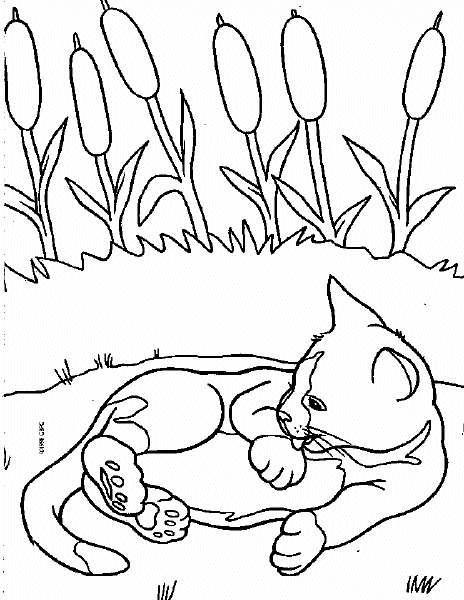 Animale pisici de colorat p63