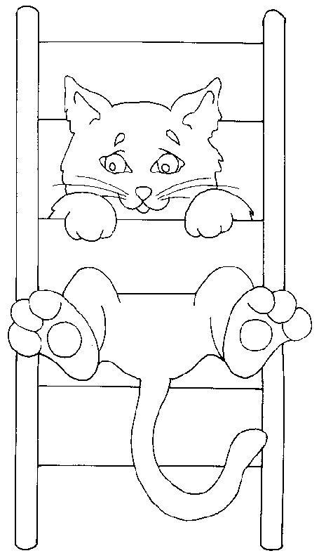 Animale pisici de colorat p78