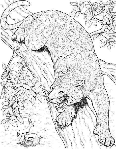 Planse De Colorat Animale Tigri De Colorat P24 Desene De
