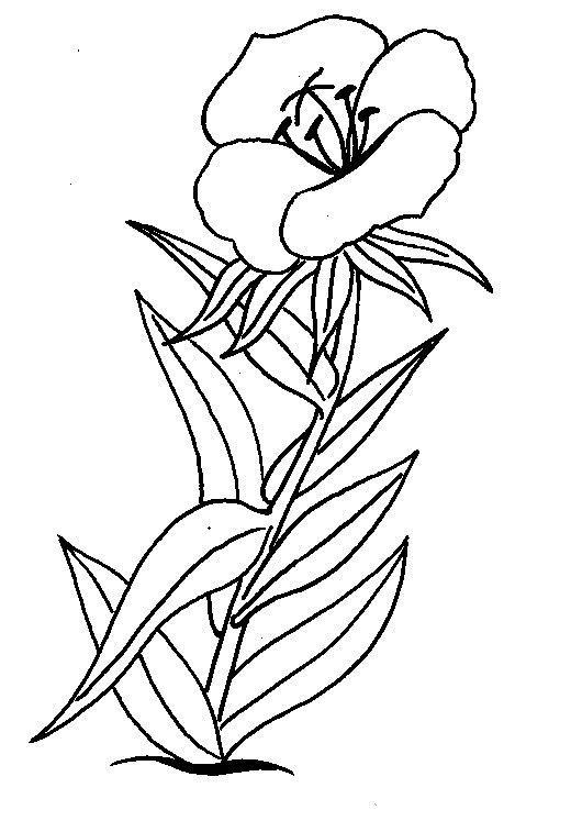 Flori de colorat p01