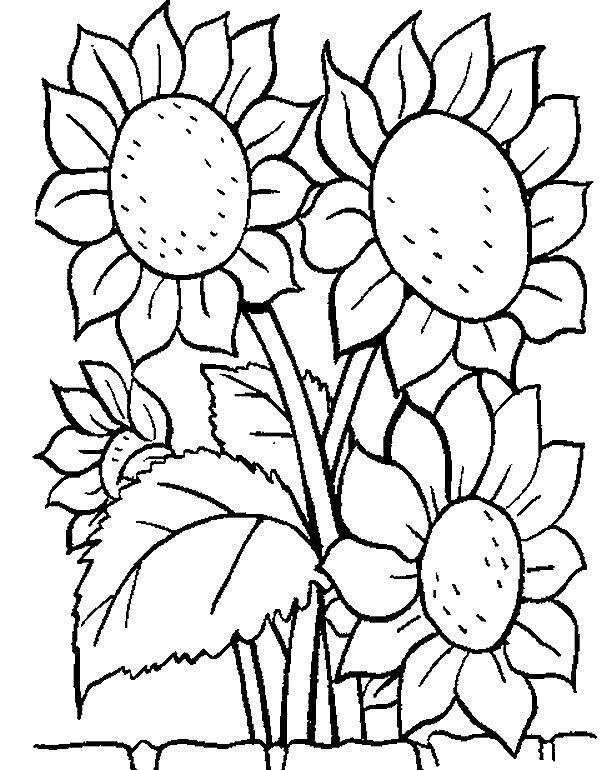 Flori de colorat p07