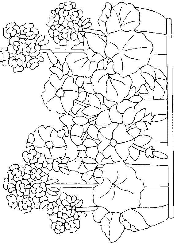Flori de colorat p101