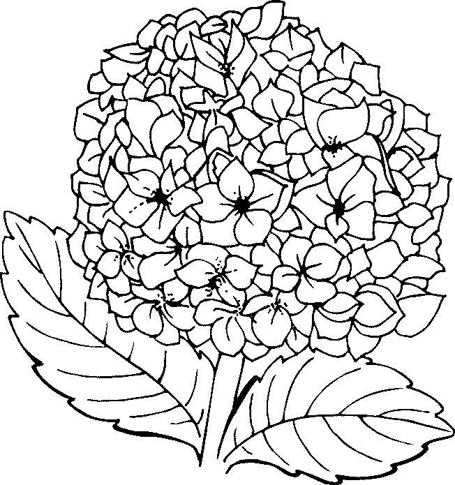 Flori de colorat p105