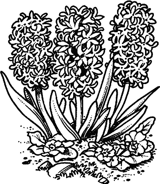 Flori de colorat p106