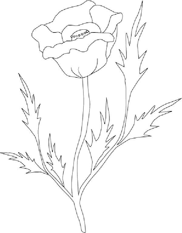 Flori de colorat p60