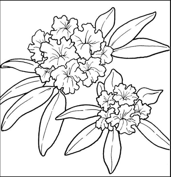 Flori de colorat p66