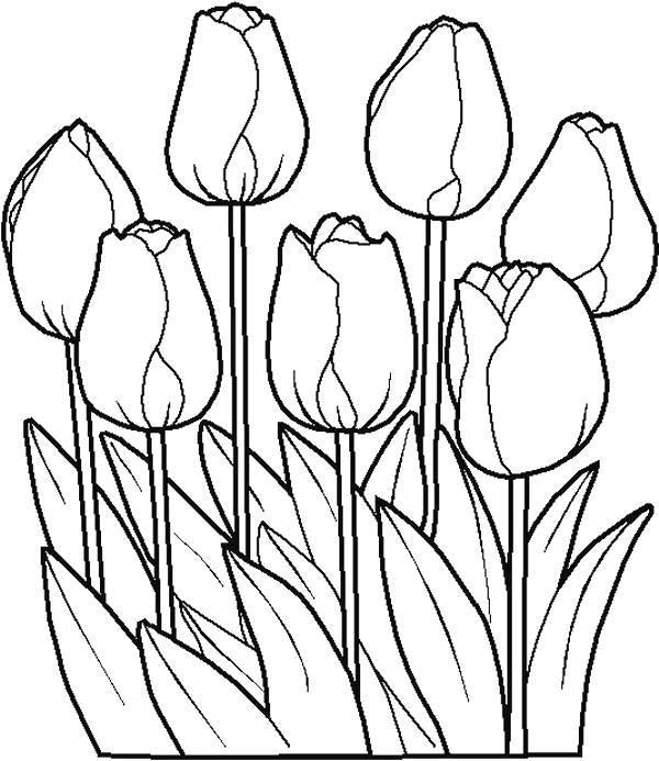 Flori de colorat p79
