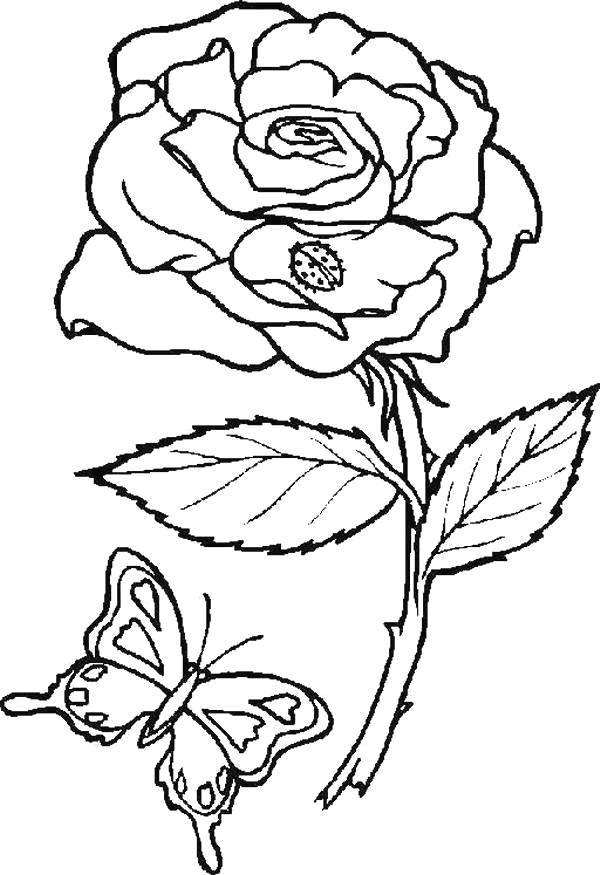 Flori de colorat p83