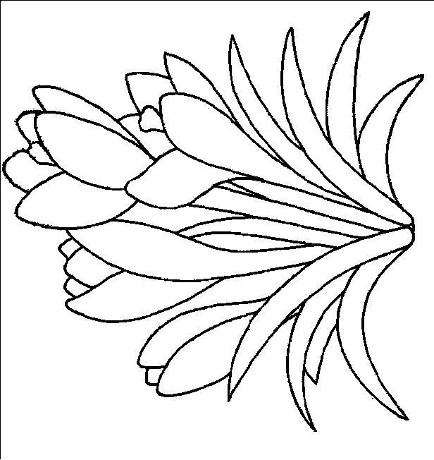 Flori de colorat p93