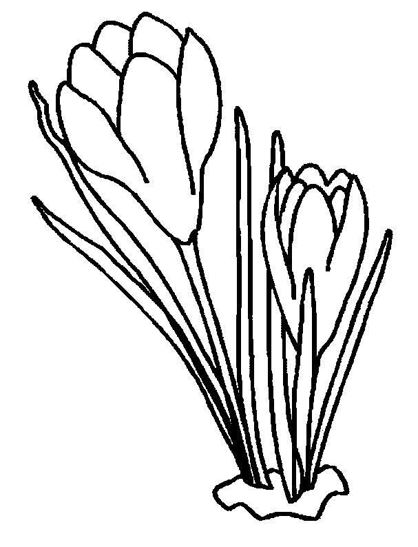 Flori de colorat p96