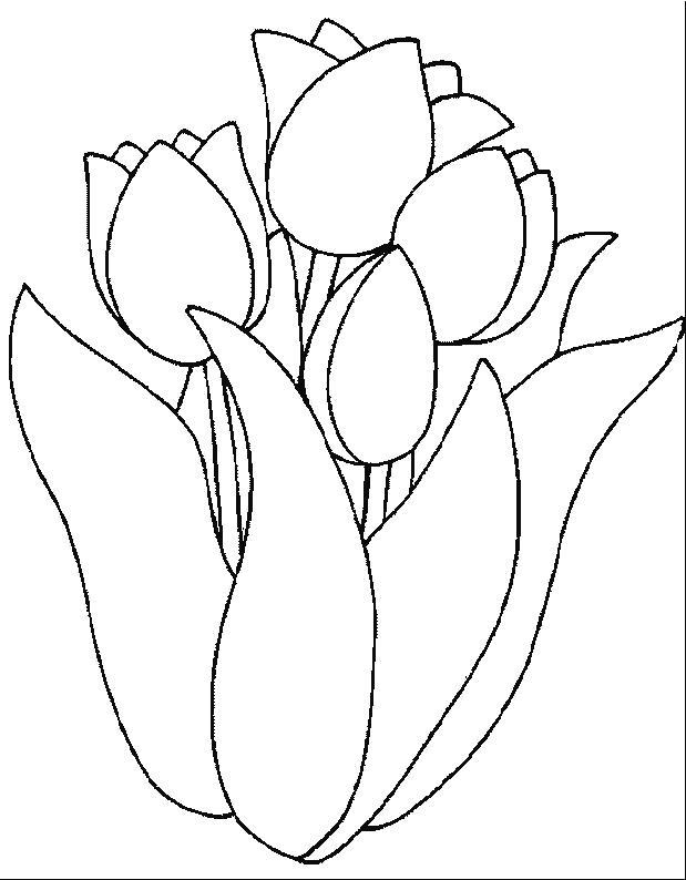 Planse De Colorat Flori Lalele De Colorat P11 Desene De