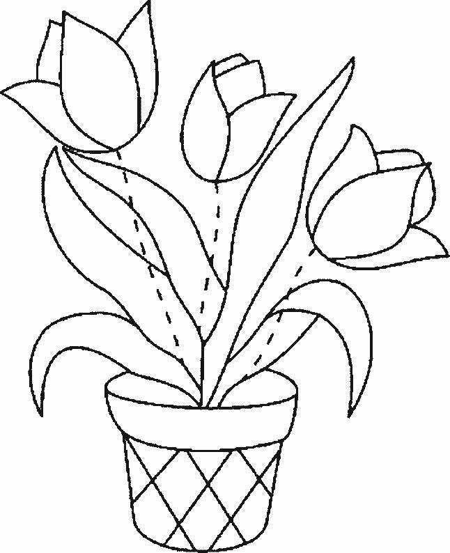 Planse De Colorat Flori Lalele De Colorat P16 Desene De