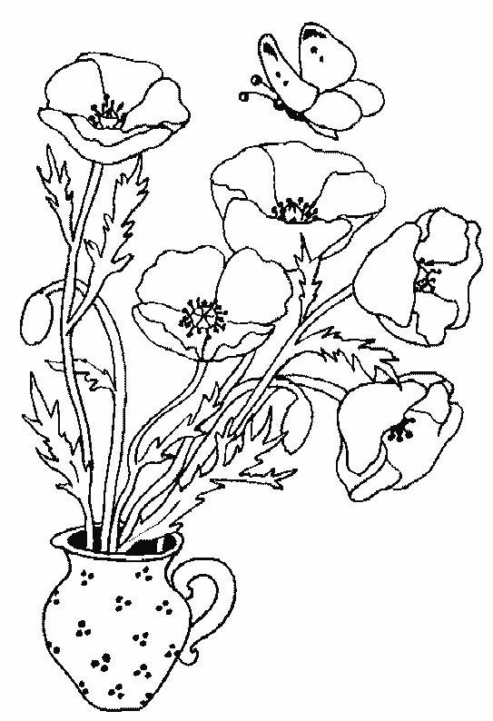 Planse De Colorat Cu Flori Maci Desene De Colorat Cu Flori