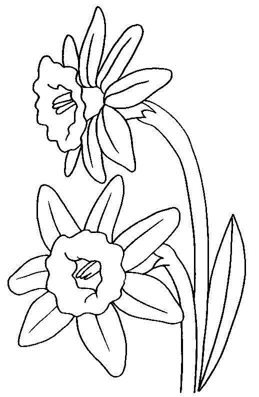 Planse De Colorat Flori Narcise De Colorat P05 Desene De
