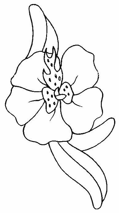 Planse De Colorat Cu Flori Orhidee Desene De Colorat Cu