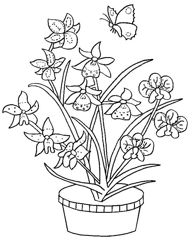 Planse De Colorat Flori Orhidee De Colorat P06 Desene De