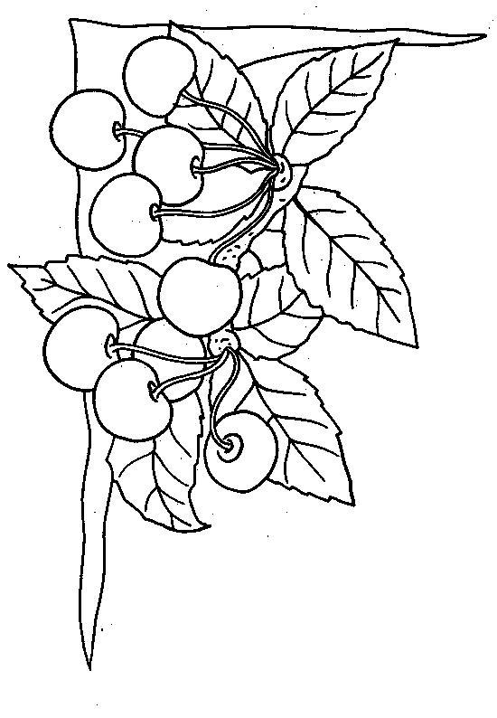 planse de colorat fructe cirese de colorat p05
