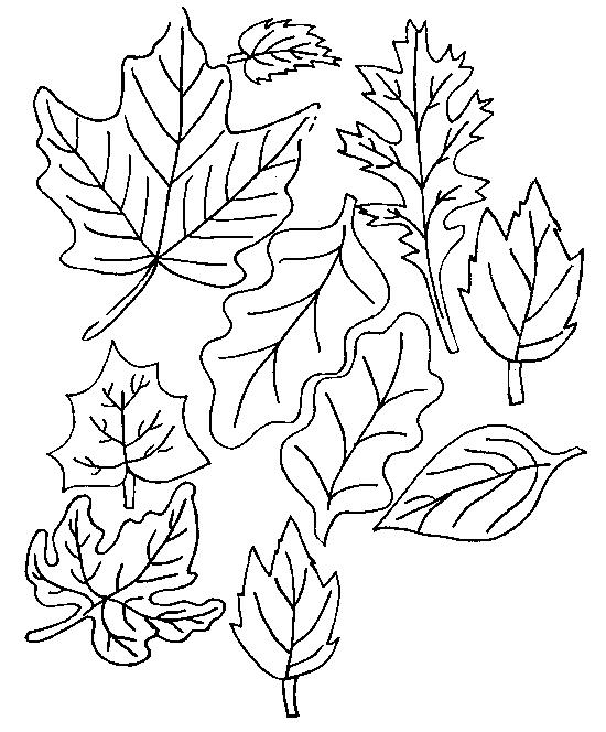 Planse De Colorat Cu Frunze Desene De Colorat Cu Frunze