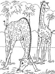 plansa de colorat animale girafe #2