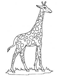 plansa de colorat animale girafe #6