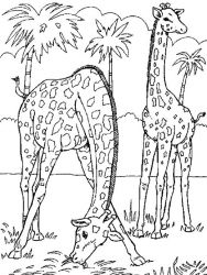 plansa de colorat animale girafe #23