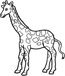plansa de colorat animale girafe #24