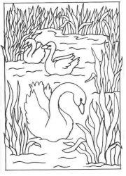 plansa de colorat animale lebede #11