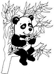 plansa de colorat animale ursi panda #2