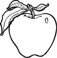Planse De Colorat Cu Fructe Desene De Colorat Cu Fructe