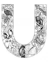 plansa de colorat alfabetul cu animale de colorat p21