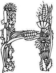plansa de colorat alfabetul cu flori de colorat p08