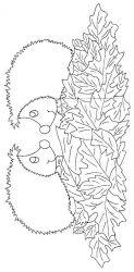 plansa de colorat animale arici de colorat p06