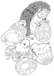 plansa de colorat animale arici de colorat p18