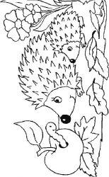 plansa de colorat animale arici de colorat p29