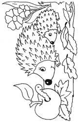 plansa de colorat animale arici de colorat p33