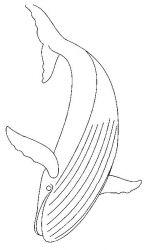 plansa de colorat animale balene de colorat p09