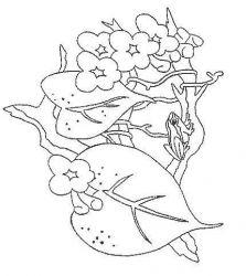 plansa de colorat animale broscute de colorat p05