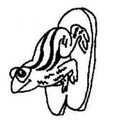 plansa de colorat animale broscute de colorat p10