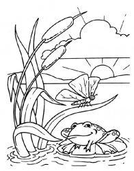 plansa de colorat animale broscute de colorat p106