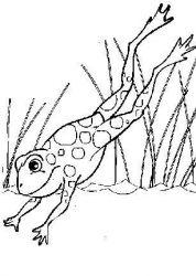 plansa de colorat animale broscute de colorat p11