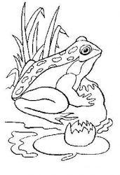 plansa de colorat animale broscute de colorat p24