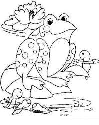 plansa de colorat animale broscute de colorat p77