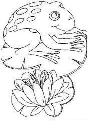plansa de colorat animale broscute de colorat p82